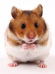 Pet Odor Hamster