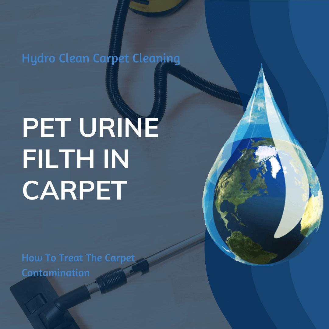 featured image pet urine filth in carpet