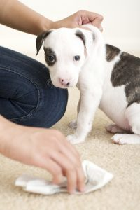 Pet Odor treatment Colorado Springs