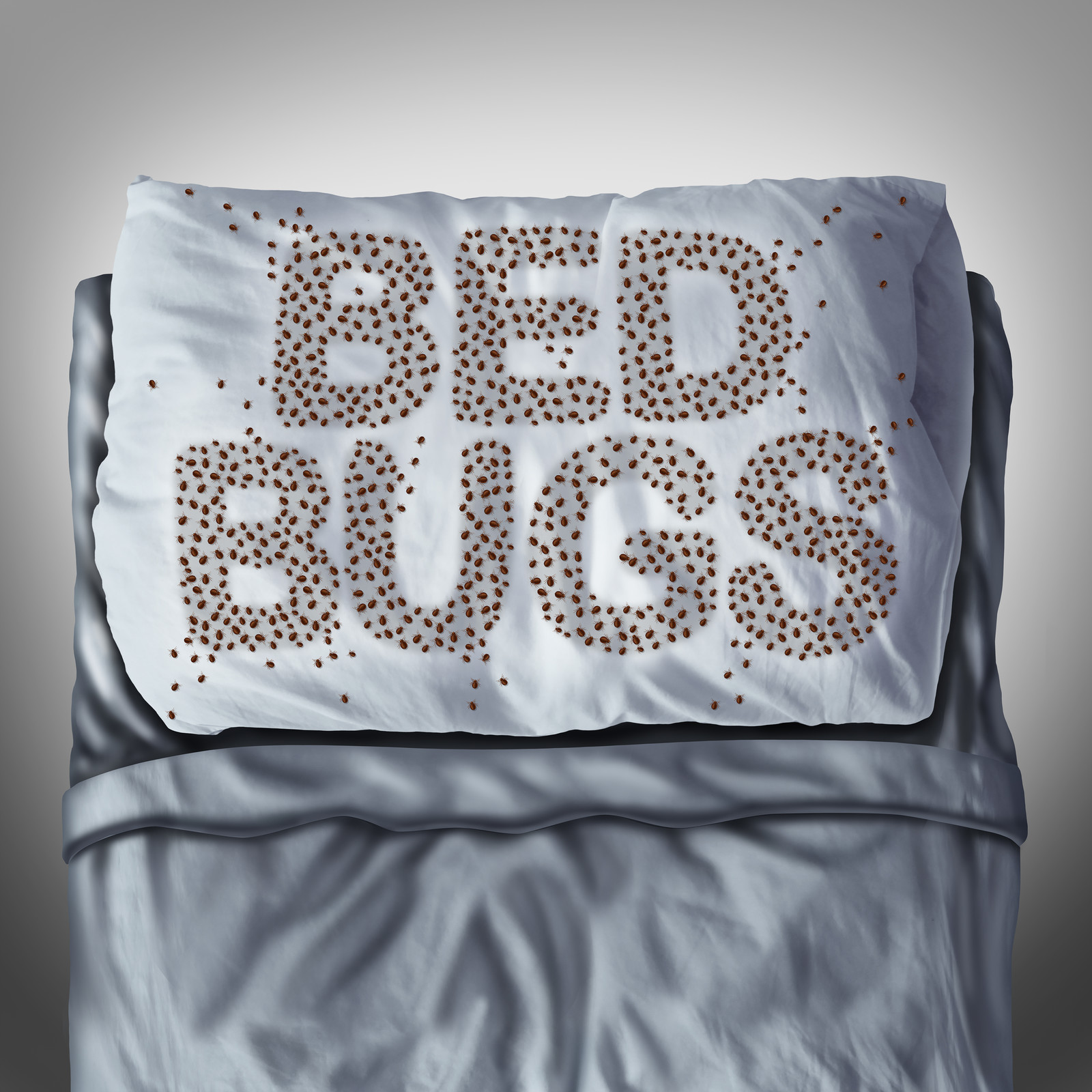 Bed Bugs on a Pillow